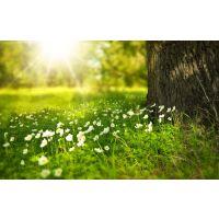 Kołdry i poduszki na sezon wiosna/lato